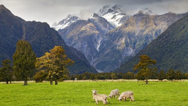 Нова Зеландія заявила про перемогу над Covid-19. Країна знімає всі обмеження