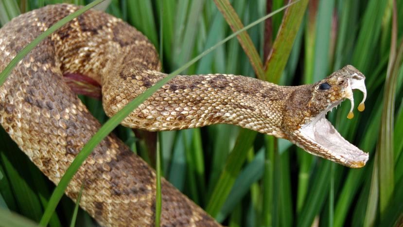 У Карпатах туриста вкусила змія – як надати першу допомогу в таких випадках