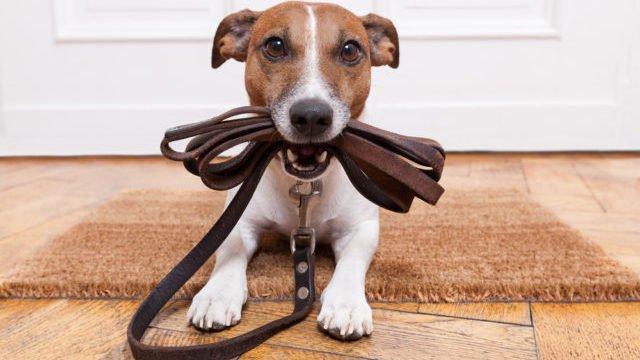 Жодного діабету та стресу: як собака впливає на здоров'я господаря