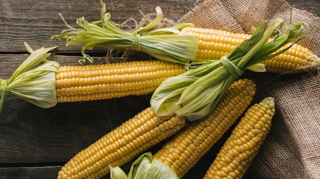 Кормова та цукрова: як обрати кукурудзу і чим вона корисна