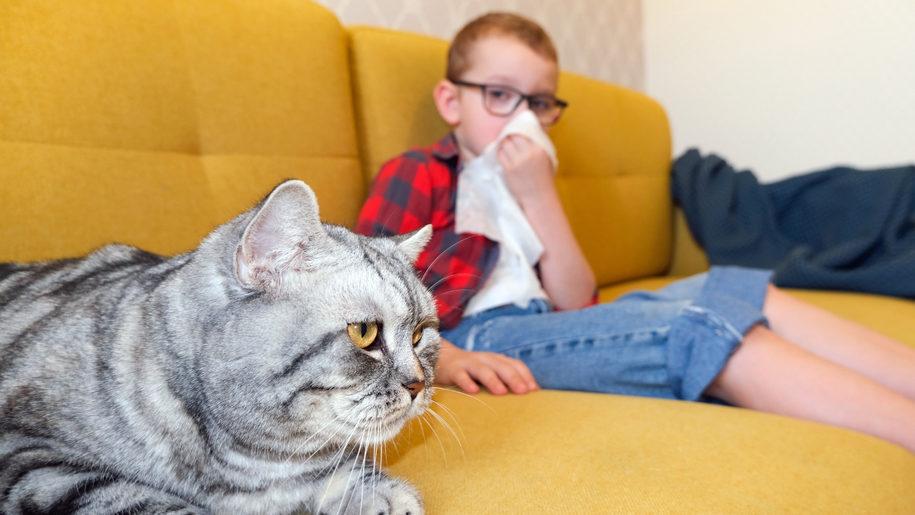 Всесвітній день котів: як побороти алергію на пухнастих друзів