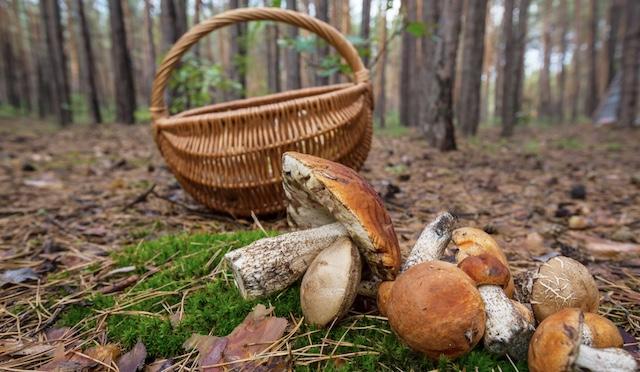 Одни из самых тяжелых. Симптомы отравления грибами и первая помощь