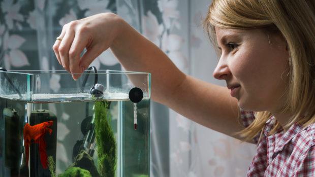 рибки, акваріум